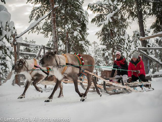ráidu-reindeer-sled-drive-jukkasjarvi
